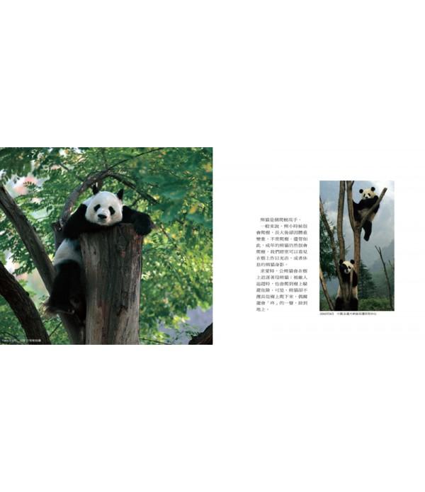 上帝的絨毛玩具Panda x Panda